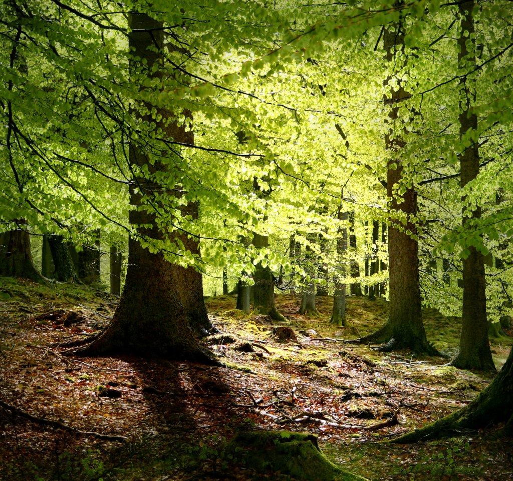 1992 <br>Déclaration de Principes de Gestion des Forêts