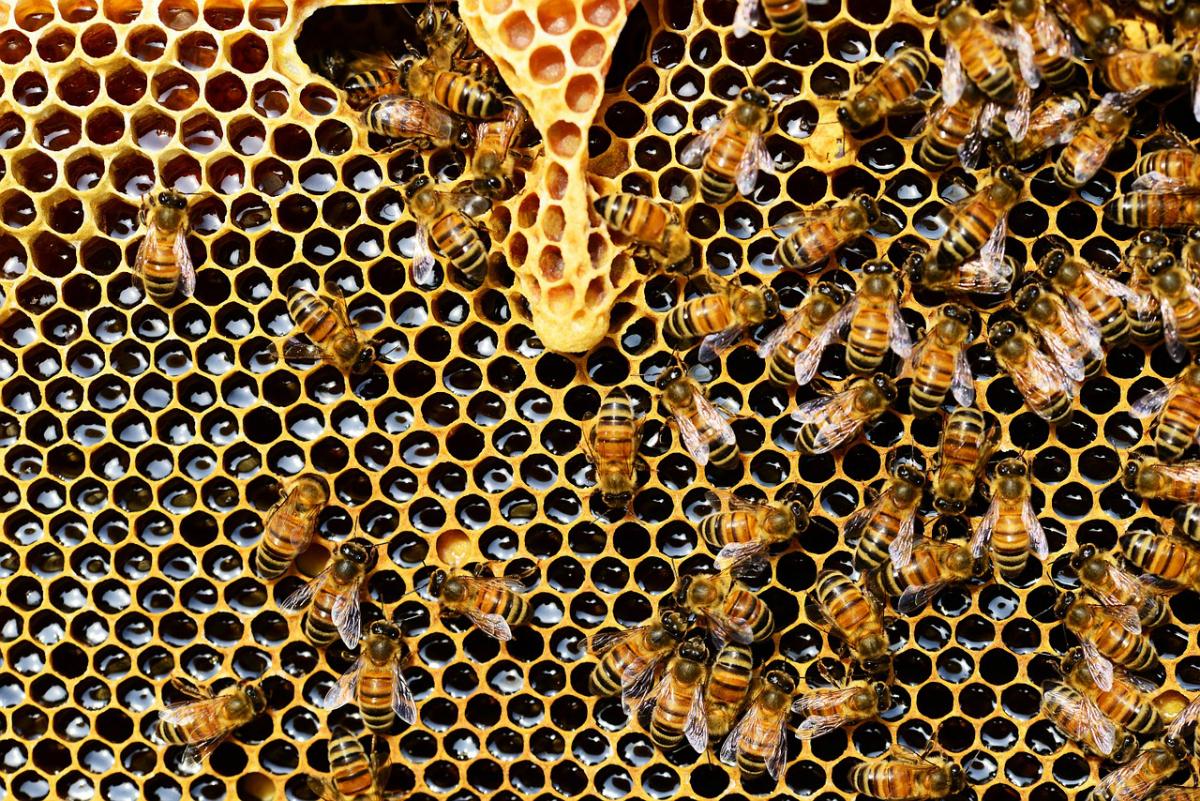 Des potagers et un rucher en ville de Genève